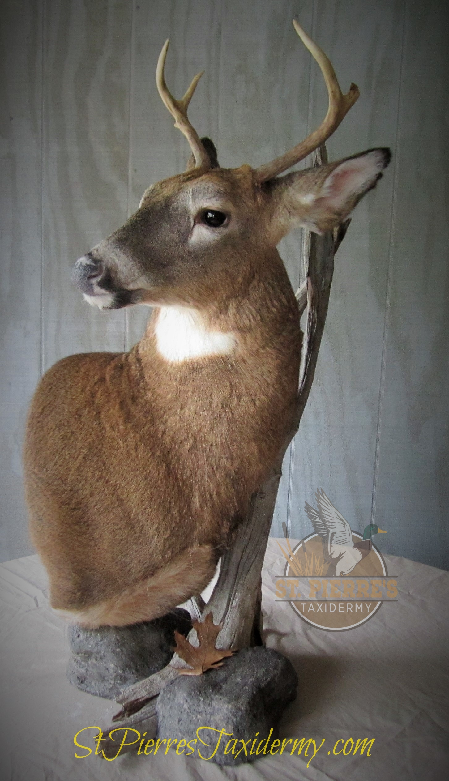 Whitetail Deer Custom Mount