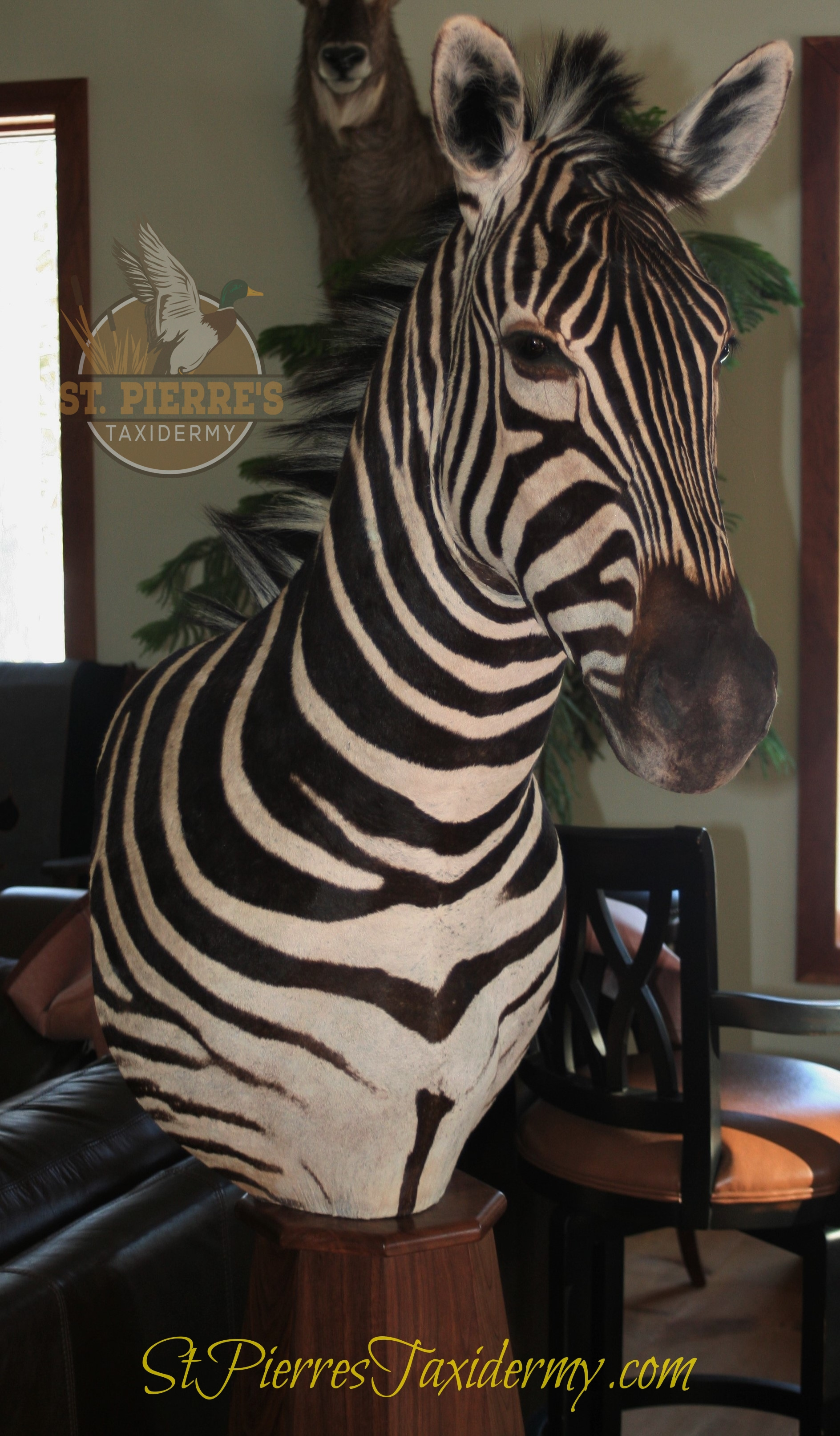 Zebra Custom Trophy Mount